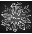 Graphic cocoa fruit vector image vector image
