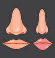 human nose and mouth vector image