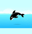 killer whale jumping on sea flat art vector image