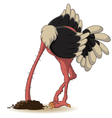 ostrich has buried a head in land vector image