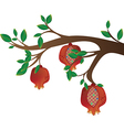 Tree branch with pomegranates vector image vector image