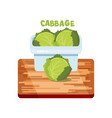 cabbage flat design vector image vector image