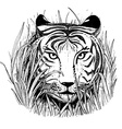 black and white sketch a tigers face vector image