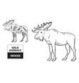 cut of elk set poster butcher diagram - desert vector image vector image