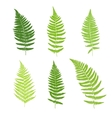 Set of fern frond silhouettes vector image vector image