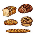 sketch bread color icons of bakery shop vector image vector image