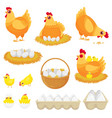 chicken eggs hen farm egg nest and tray of vector image vector image