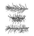 fir-tree monochrome branches vector image