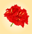 Flower red hibiscus blossom simple tropics flower vector image vector image