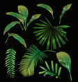 tropical leaf set vector image vector image