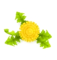 Yellow Dandelion vector image