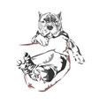 hand a man was gently holding bully dog vector image vector image