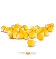 scattered grains of corn vector image vector image
