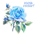 Watercolor drawing of blue rose