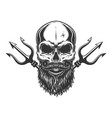 bearded and mustached skull vector image vector image
