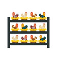chicken farm animal vector image