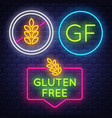 gluten free badge collection allergy sign neon vector image