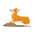 happy cute corgi dog icon vector image vector image