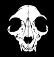 white animal skull on a black background vector image