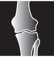 Xray on bones vector image vector image