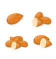 closeup almond icon healthy eating cartoon group vector image vector image