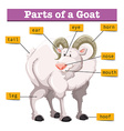 Diagram showing parts of goat vector image vector image