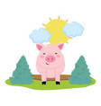 pig in the farm vector image vector image