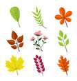 simple floral various leaves graphic set vector image