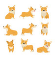 cartoon characters welsh corgi set vector image