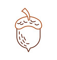 acorn oak nut tree fruit forest on the white vector image