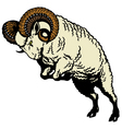 ram sheep vector image vector image