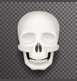 realistic human skull isolated 3d realistic vector image vector image