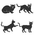 set of cat isolated on white background vector image vector image