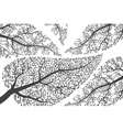Branches silhouettes on white background vector image vector image