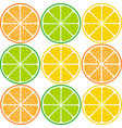 citrus fruit slices vector image