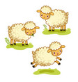 cute cartoon sheep set vector image vector image