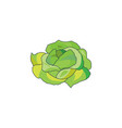 color cabbage icon on a white vector image vector image
