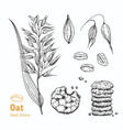oats hand drawn vector image vector image
