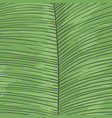 tropical leaf striped background hand drawn lines vector image vector image