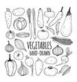 set hand drawn vegetables vector image vector image