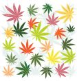 marijuana leaves vector image