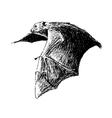 flying fruit bat vector image