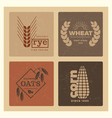 organic wheat grain farming agriculture vector image vector image
