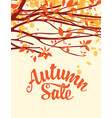 autumn sale banner with inscription and branches vector image