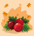 cranberries icon image vector image