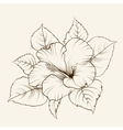 Flower of mallow vector image
