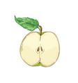 half apple fruit hand drawn vector image vector image