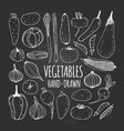 set vegetables in doodle style on the vector image vector image