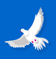 white dove while flying vector image vector image