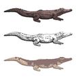 croc vector image vector image